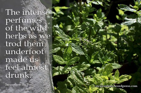 quotes of herbs