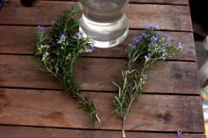 how to plant rosemary